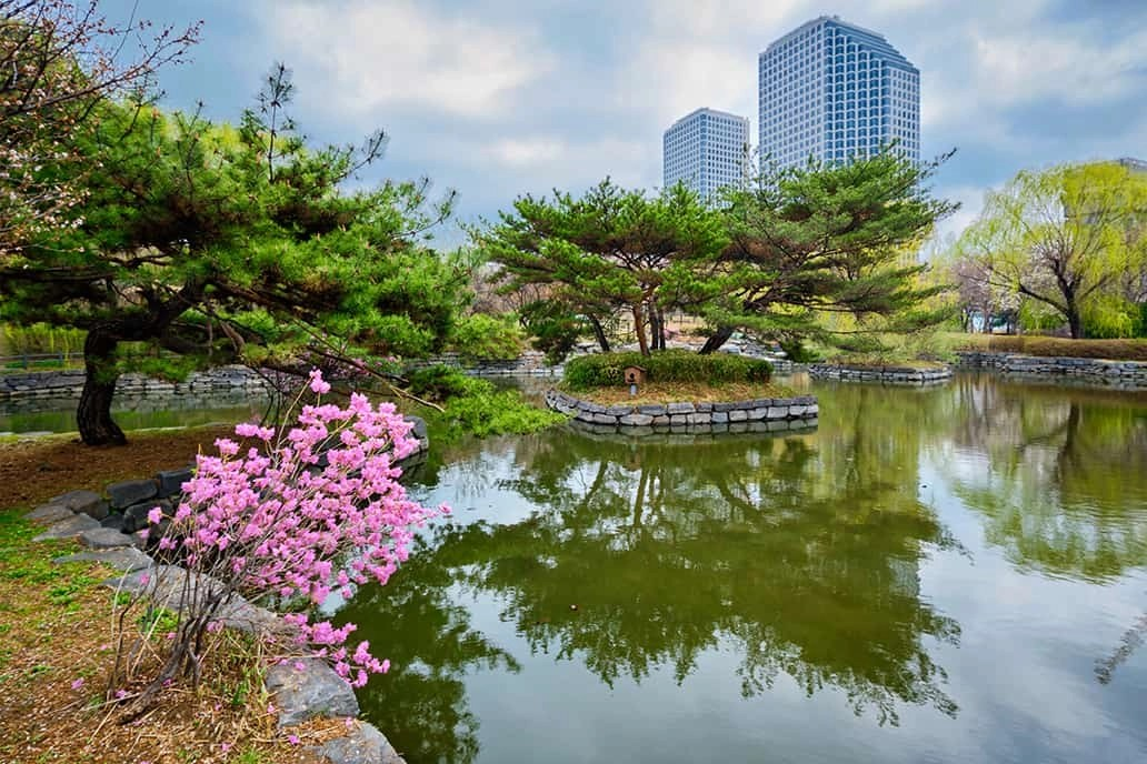 cosmetic surgery tourism in seoul