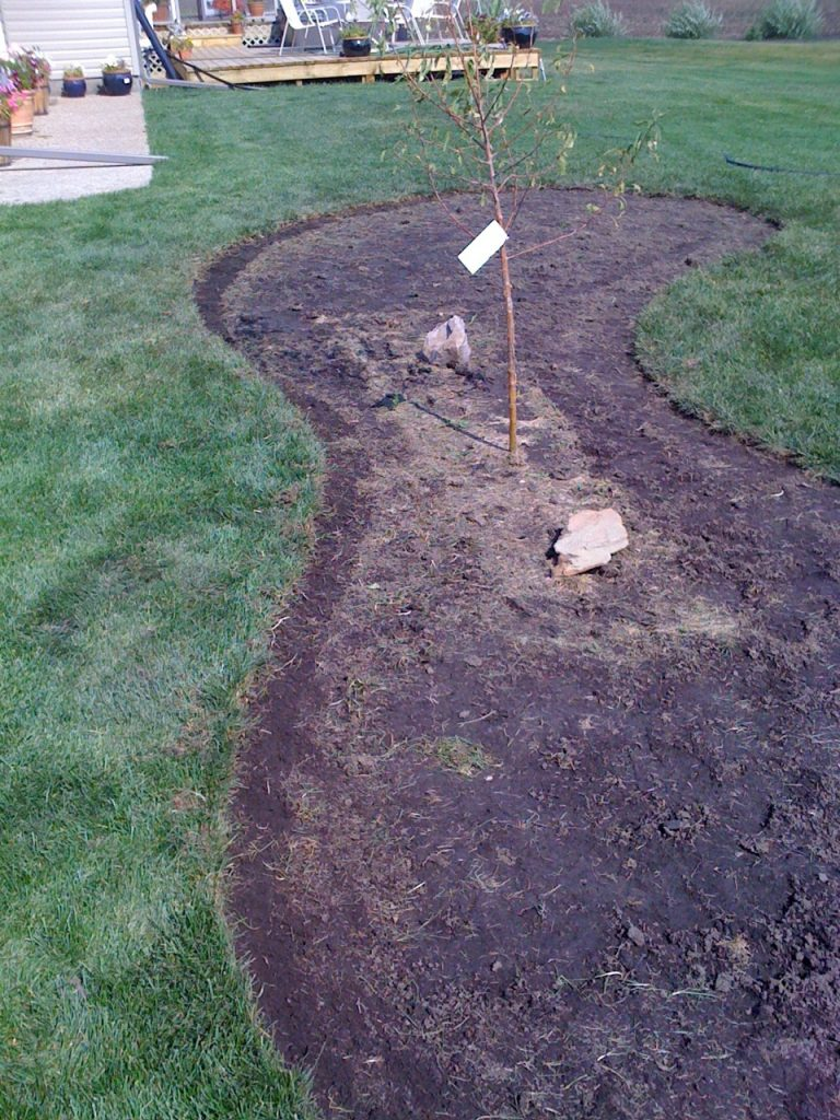 homeowner just cut along line with knife and peeled this fairly new lawn.