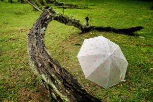 Farm Umbrella Insurance
