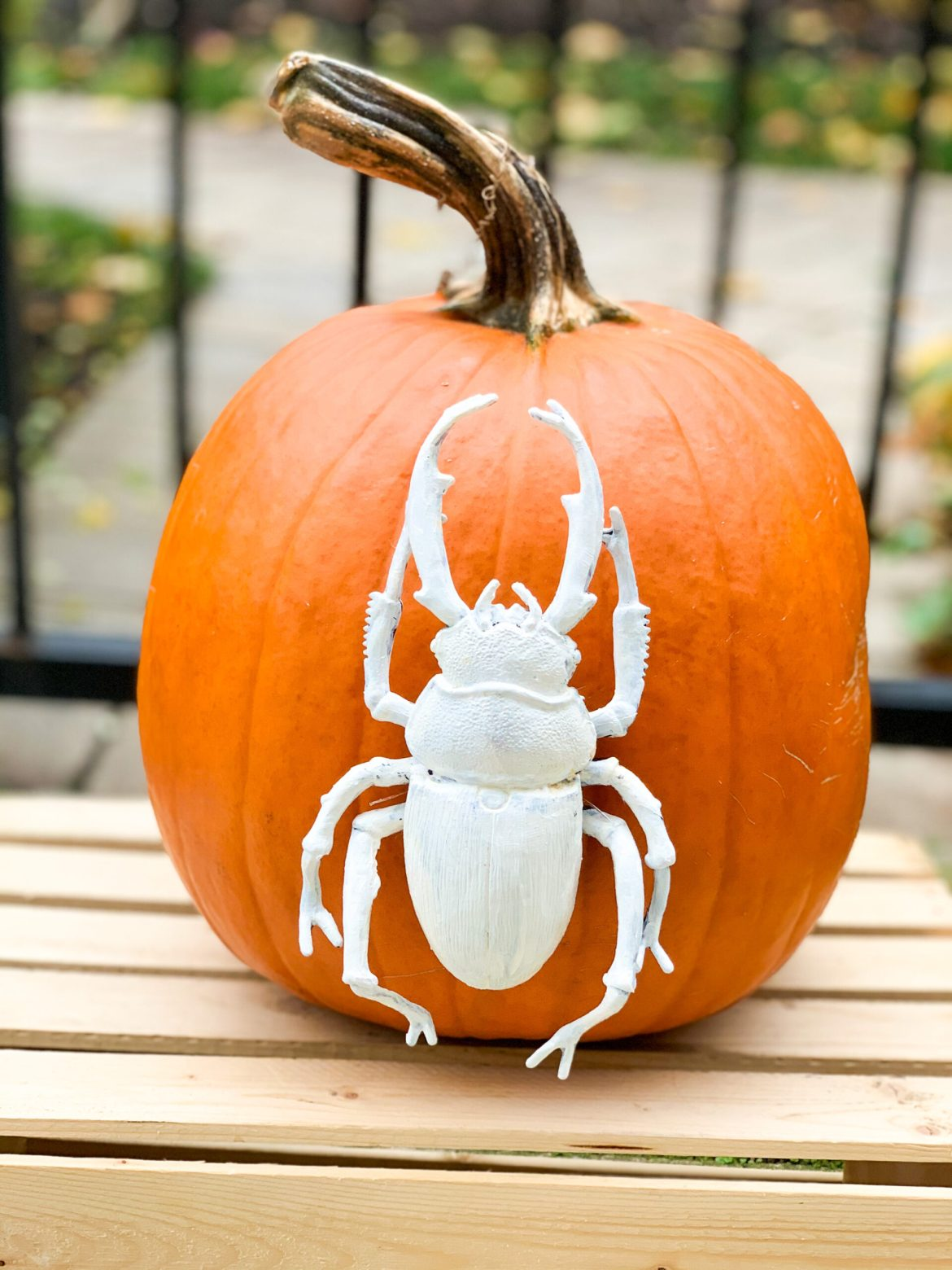 Challenge Friends to a Virtual Pumpkin Carving Competition