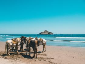 The Best Areas to Stay in Mazatlan, Mexico