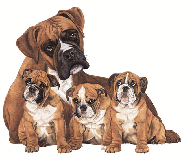 boxer breed types