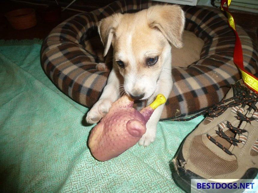 Rescue Puppy 'Ali'