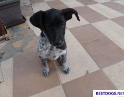 Another puppy was found