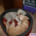 Rescue dog DuDa