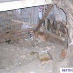 Ex-barrel dog Kasperi