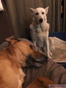 Happy ex-barrel dogs