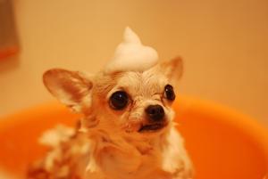 dog grooming services kelowna bathing dog-min