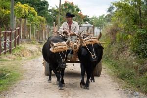 Ossenkar Cuba