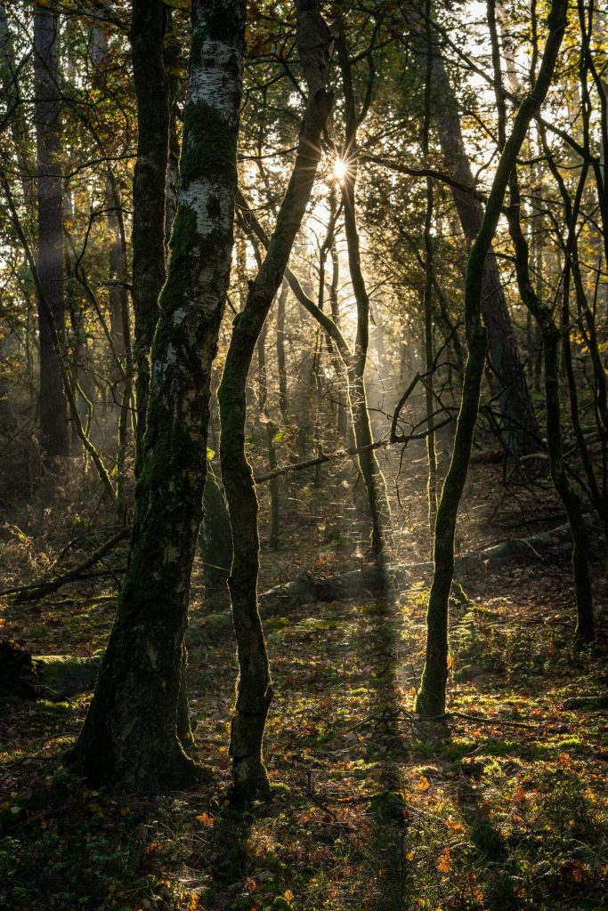 De zon schijnt door het dichte bladerdak van het Bergherbos