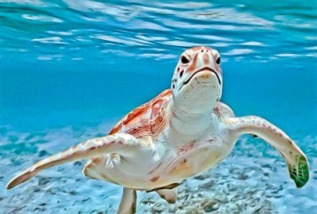 Island Tour and Turtle Farm Cayman