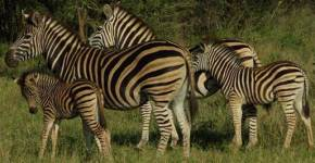 Fun Family Vacations in South Africa
