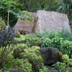 Places to visit in Hawaii: Hawaii Botanical Gardens