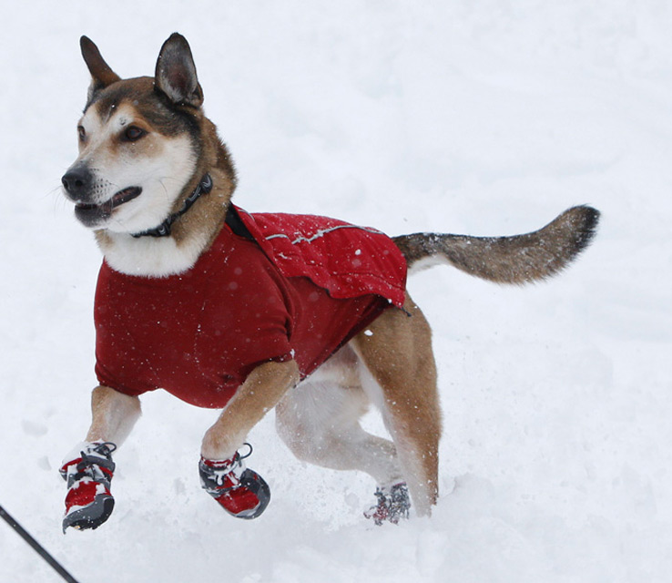 Check Here For Best Dog Boots at Affordable Rate