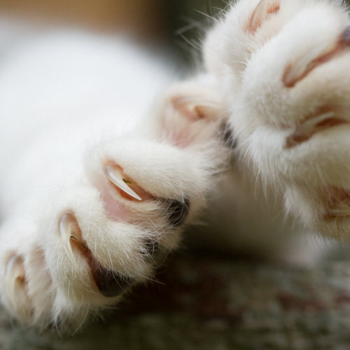 Declawing Cats – Is it Necessary?