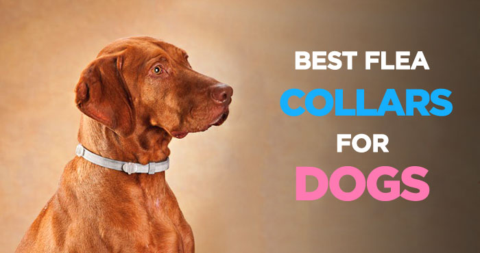 How to choose flea collars for dogs?