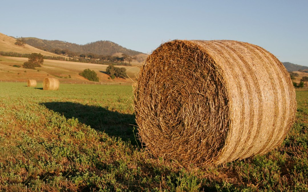 Why Do You Need to Find Hay for Sale in Ocala?