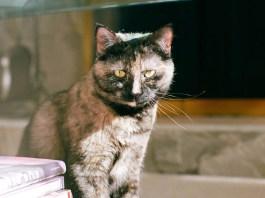 Cat Urine Cleaner