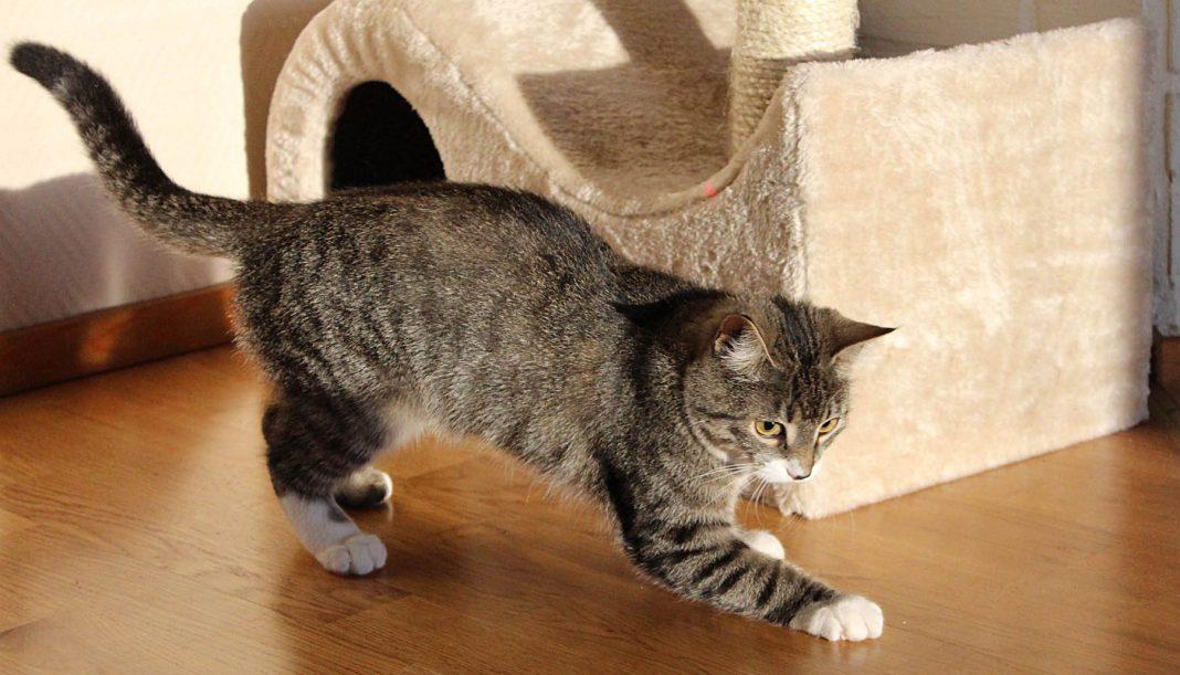 Best cat scratch posts