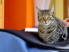 5 best apps for cats