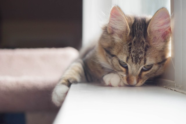 Best For Cats Terms