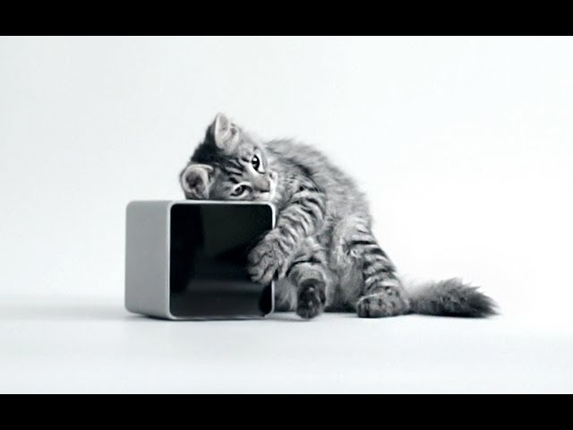 The Petcube Camera Changes Everything Best For Cats
