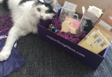 My Purrfect Gift Box