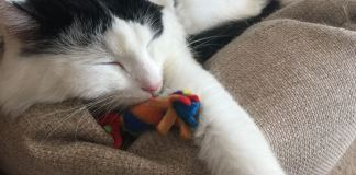 Tillypop's Toys For Pets