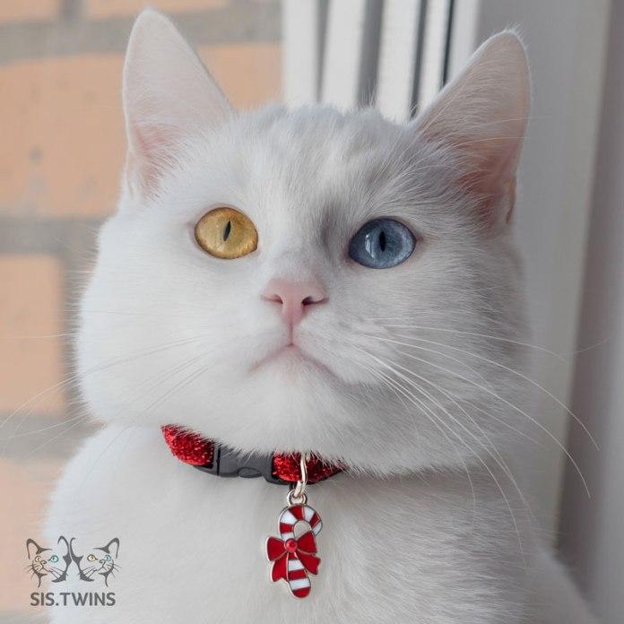 Cool Cat Collars