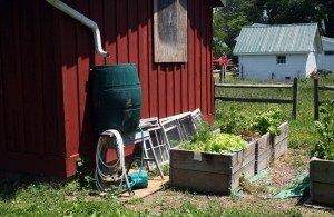 Benefits of a Rain Barrel