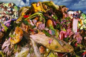 This is the Environmental Footprint of the Food We Throw in the Trash