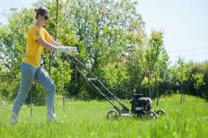 When to Mow the Lawn
