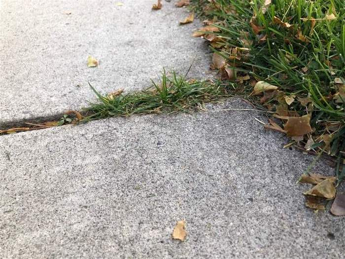 Any of the weed wackers or string trimmers reviewed on this page would be able to clean up the grassy overgrowth in the sidewalk cracks. And, a leaf blower would be a great addition to get rid of some of those leaves.