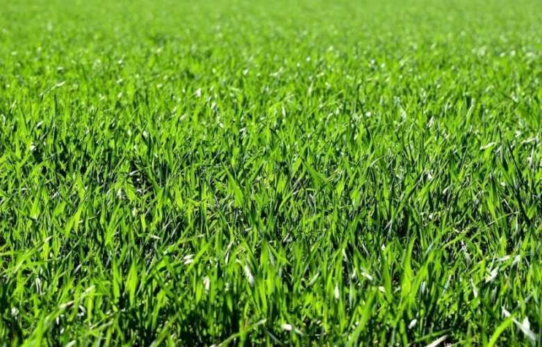 how long does it take grass to grow   Best Home Gear