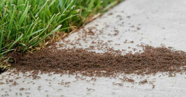 How to Remove ants permanently | Best Home Gear