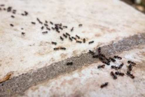 eliminating ant trails - best home gear