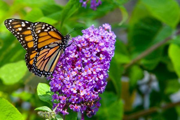 butterfly garden for kids - best home gear