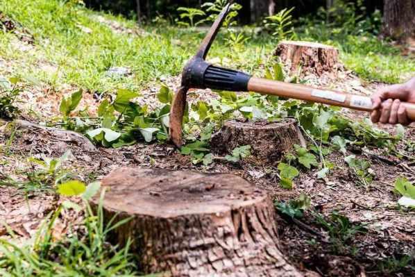 cutting tree stump - best home gear
