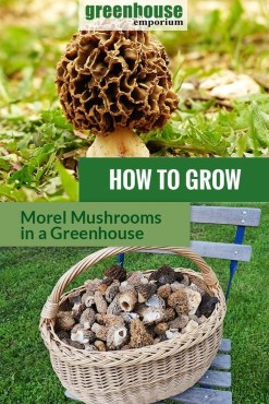 Diy Garden Mushrooms Design28