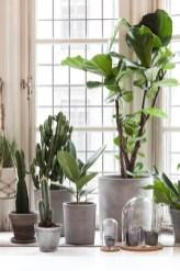 Diy Indoor Plant Display Ideas05
