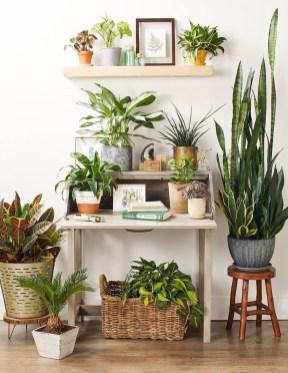 Diy Indoor Plant Display Ideas11
