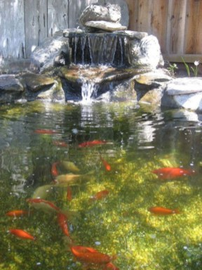 Fabulous Fish Pond Design Ideas For Your Home Yard34