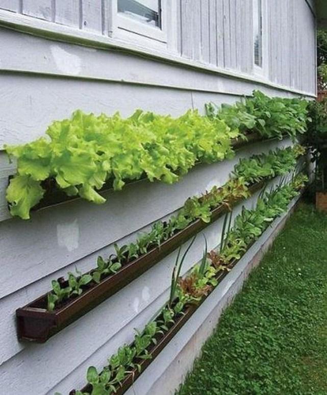 Fantastic Outdoor Vertical Garden Ideas For Small Space46