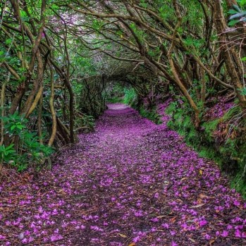 Incredibly Magical Tree Tunnels Worldwide You Must Walk Through Them03