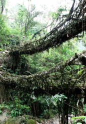 Incredibly Magical Tree Tunnels Worldwide You Must Walk Through Them05