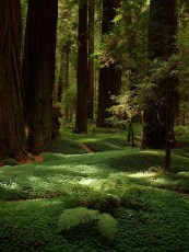 Incredibly Magical Tree Tunnels Worldwide You Must Walk Through Them06