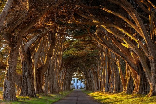 Incredibly Magical Tree Tunnels Worldwide You Must Walk Through Them15
