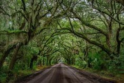 Incredibly Magical Tree Tunnels Worldwide You Must Walk Through Them16