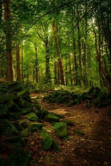 Incredibly Magical Tree Tunnels Worldwide You Must Walk Through Them33