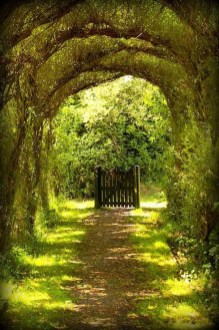 Incredibly Magical Tree Tunnels Worldwide You Must Walk Through Them34